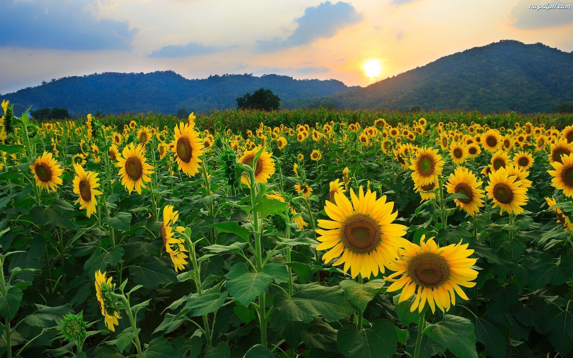 Bildergebnis für hermosas flores campo